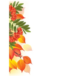 Border of autumn leaves and rowan vector image vector image