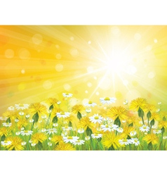 sun flowers background vector image vector image
