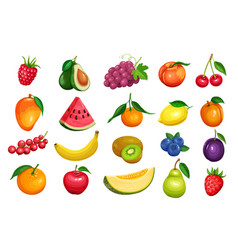Berries and fruits in cartoon style vector