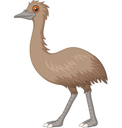cartoon emu isolated on white background vector image