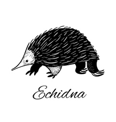 Echidna icon in doodle style Logotype for vector image