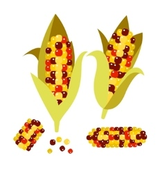 Flint or calico corn Maize vector