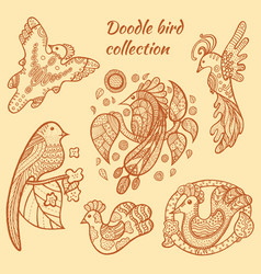 hand drawn bird collection vector image