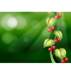 Vine plants with fruits vector
