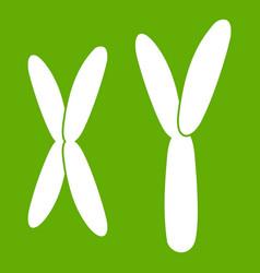 human chromosomes icon green vector image vector image