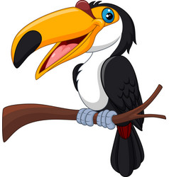 cartoon toucan bird isolated on white background vector image