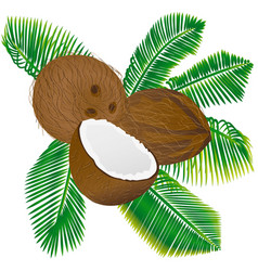 coconuts and palm leaves vector image