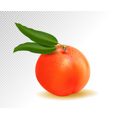 realistic ripe peach with leaf on white background vector image