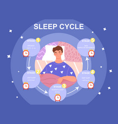 Sleep cycle infrographics vector