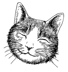 smile cat vector image