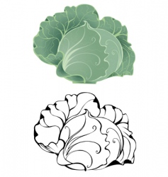stylized cabbage vector image