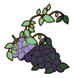 White background with bunch of grapes with shadow vector