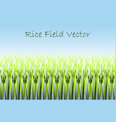 with stylized green rice paddy vector image
