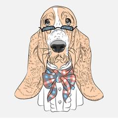 hipster dog Basset Hound breed vector image vector image