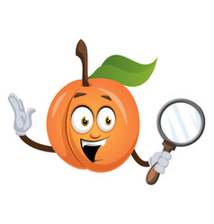 apricot with magnifier tool on white background vector image