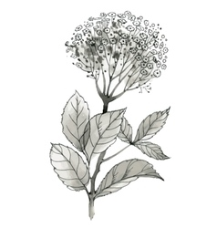 Beautiful hand-drawn monochrome wildflower vector
