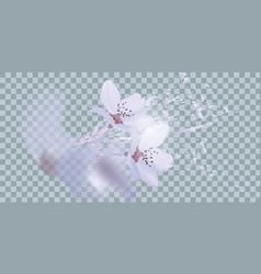 Bouquet realistic daffodil flowers daffodil vector