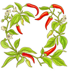 cayenne pepper frame vector image