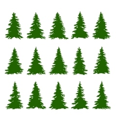 conifer trees set on white background vector image