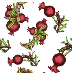 hand drawing pattern pomegranate colorful vector image
