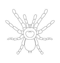 tarantula spider Brachypelma smithi spider female vector image vector image