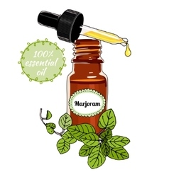 Bottle of Marjoram essential oil with dropper vector