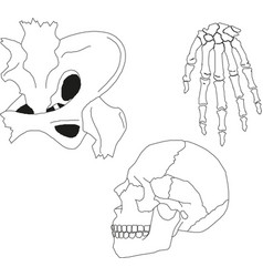 collection human skeleton eps 10 vector image