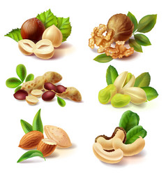 Different nuts realistic set vector