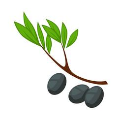 olive branch greek food black olives isolated vector image