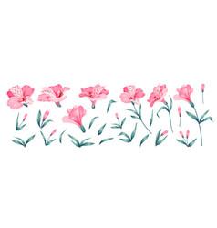 Set different alstroemeria flowers on white vector