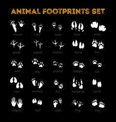 animal track black background vector image vector image