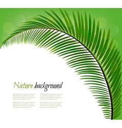 Nature background with a palm leaf vector image
