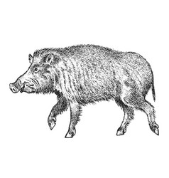 wild boar pig or swine forest animal symbol vector image