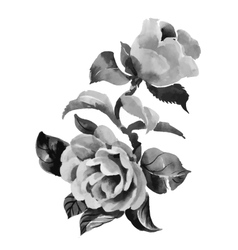 Hand drawn rose flowers vector image