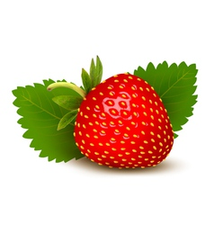 Strawberry with leaves vector