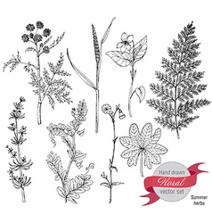 Set of herbs and flowers hand drawn vector image