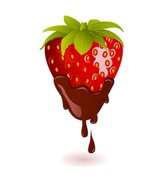 Chocolate Dipped Strawberry vector image