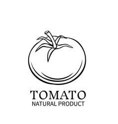 hand drawn tomato icon vector image