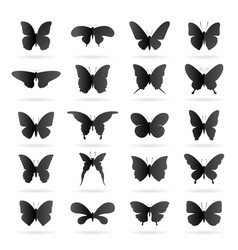 group black butterfly on white background vector image