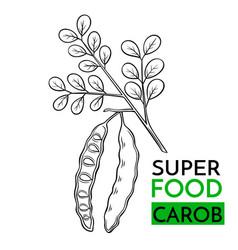 Icon superfood carob vector