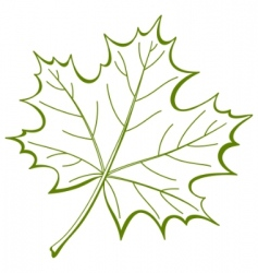 leaf of a maple vector vector image