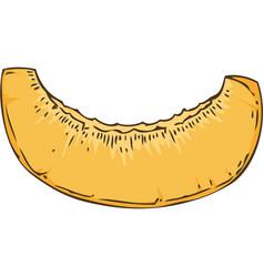 Ripe apricot slice vector
