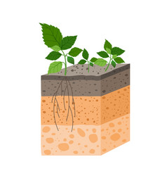 soil profile with plant breed vector image