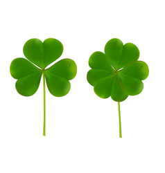 clover four leaf for saint patrick day vector image vector image