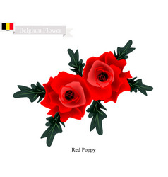 red poppies the popular flower of belgium vector image vector image