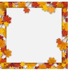 white blank with autumn maple leaves vector image vector image