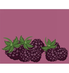 Blackberries delicious background vector