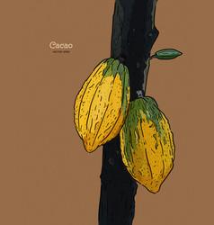 Cacao hand draw sketch vector