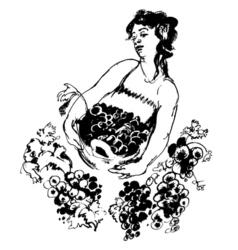 plant harvest vector image