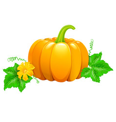 pumpkin with flower and leaves vector image vector image